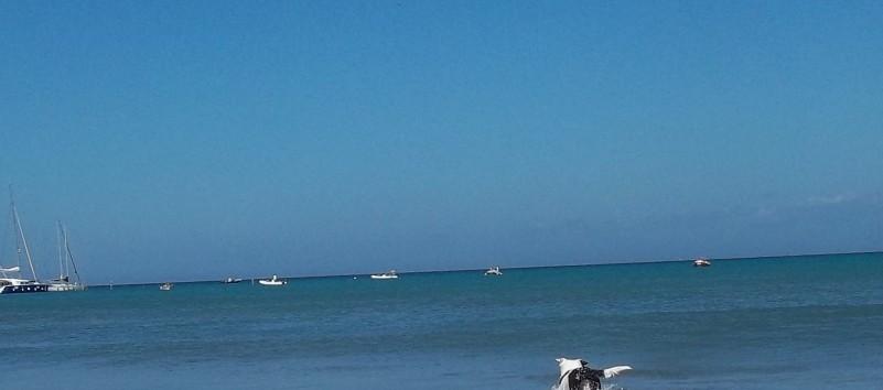 Spiagge attrezzate per cani riviera toscana - Bagno marechiaro viareggio ...