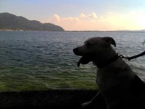 Vacanze con cane
