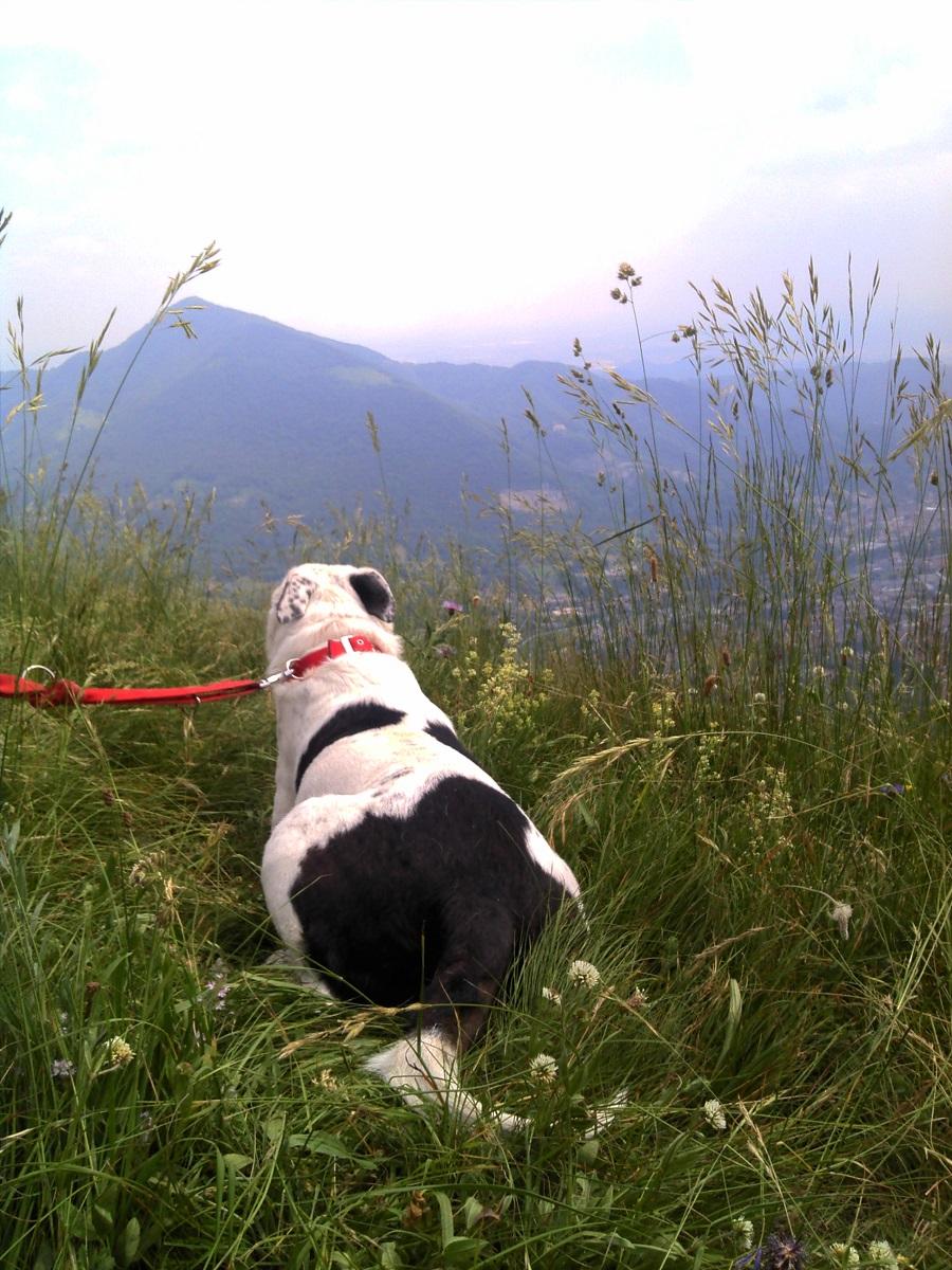 Hotel per cani in montagna | Le valli Lombarde
