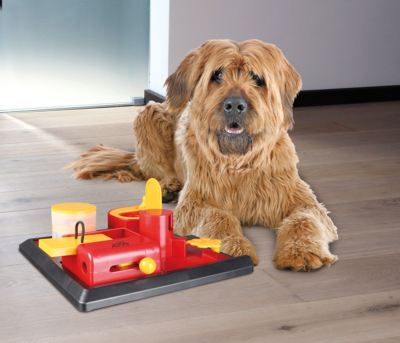 Giochi intelligenti per cani per tutti i gusti - Giochi che si baciano a letto ...