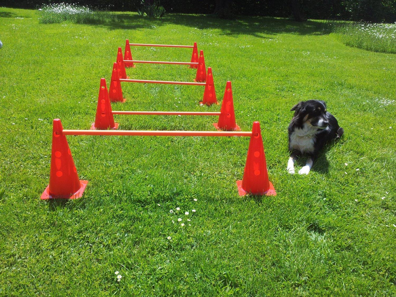 Dog Agility Training Ma