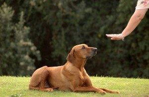 clicker per cani