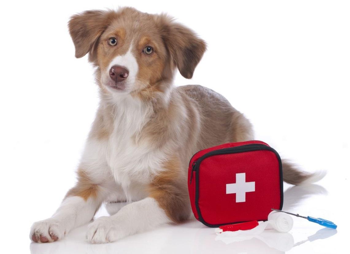 Kit Pronto soccorso per cani | Tienilo sempre con te!