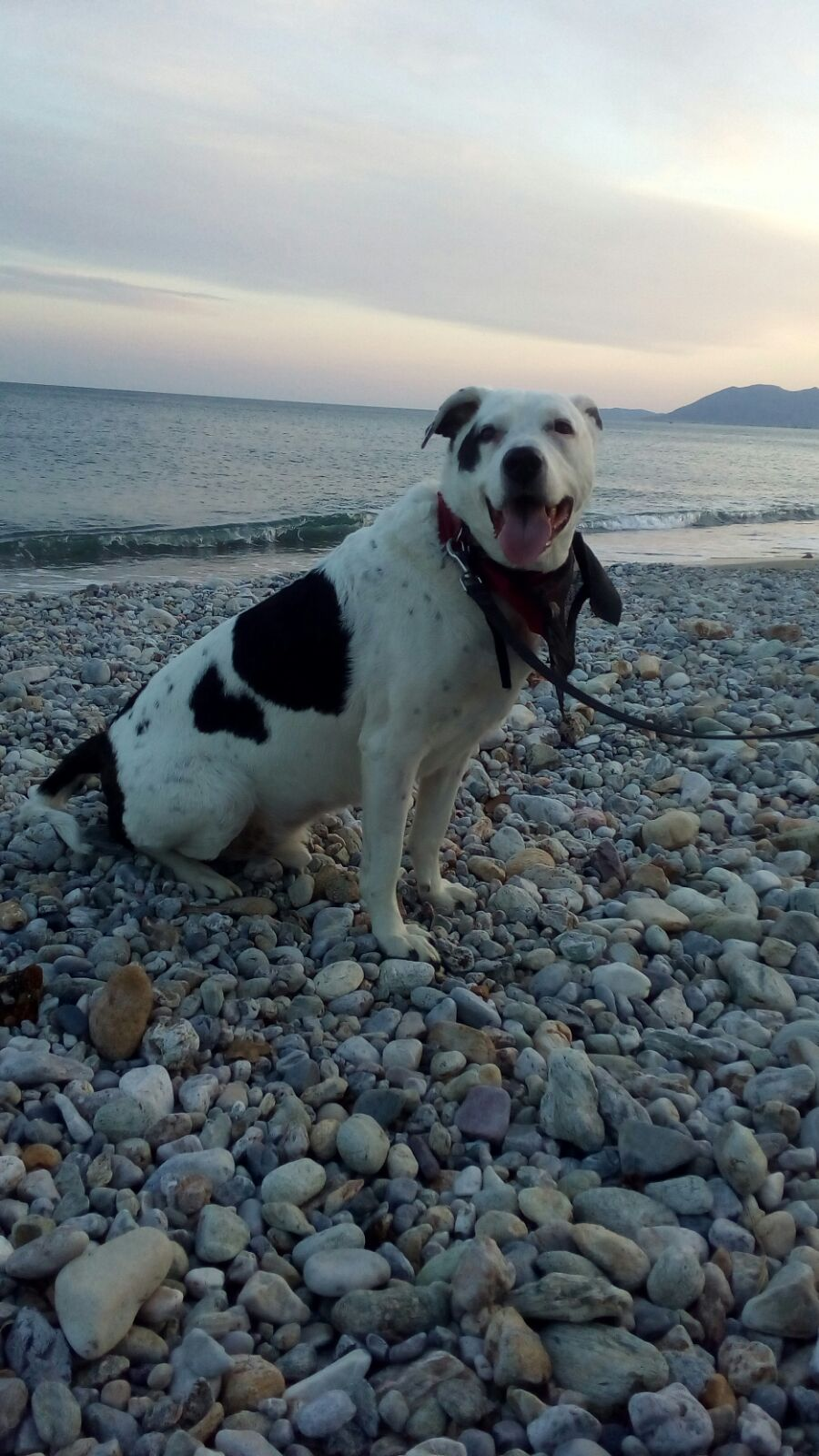 Al mare con il cane: come comportarsi e cosa portare