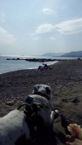vacanze on il cane al mare
