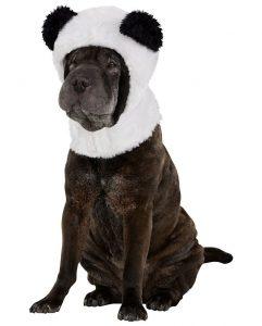 cappelli per cani
