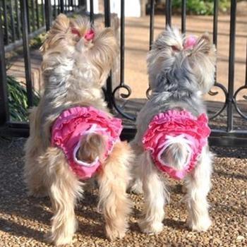Acquista i più venduti massimo stile stati Uniti Mutande per cani   Per cagnoline e cani!