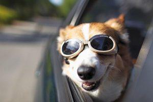 occhiali da sole per cani