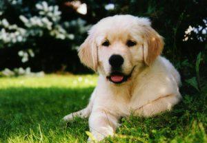 pensione per cani in tosca