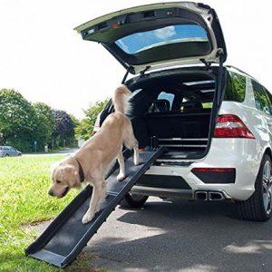 rampa per cani