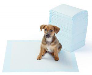 tappetini igienici cani