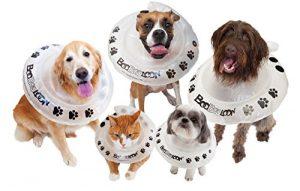 collare elisabbettiano cani