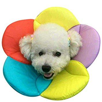 Collare Elisabettiano Morbido.Collare Elisabettiano Per Cani Proteggilo Da Se Stesso