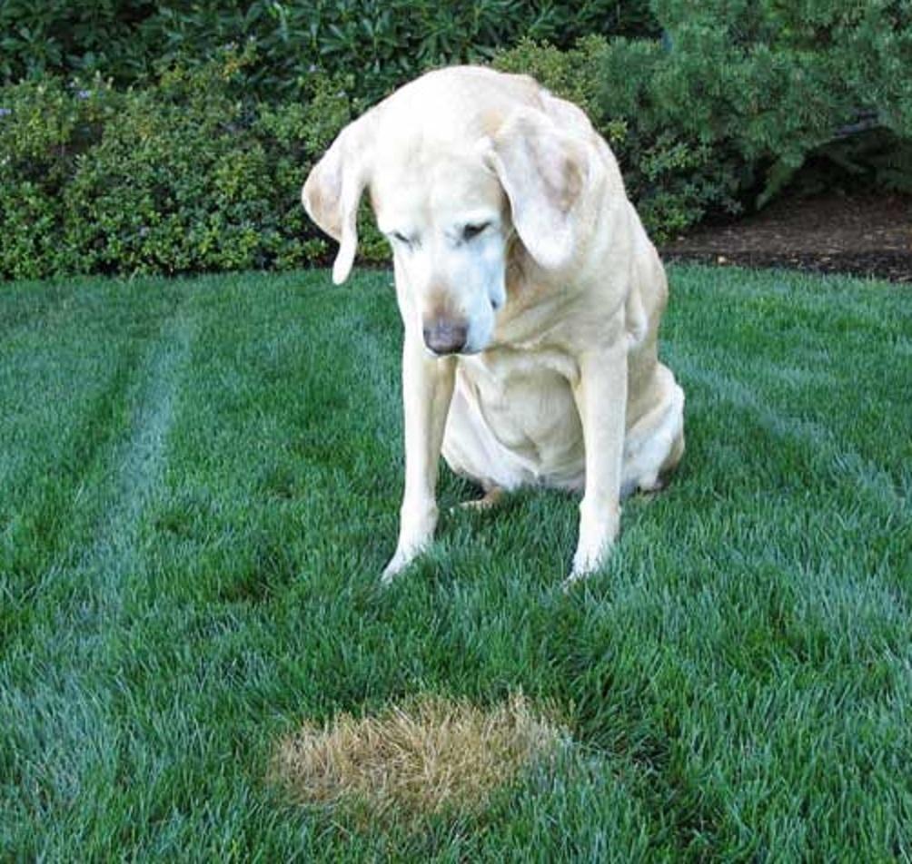 Pietre laviche salva prato elimina le tracce di pip - Eliminare odore pipi cane giardino ...