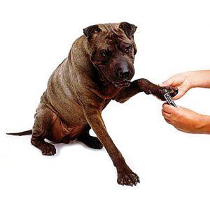 unghie dei cani