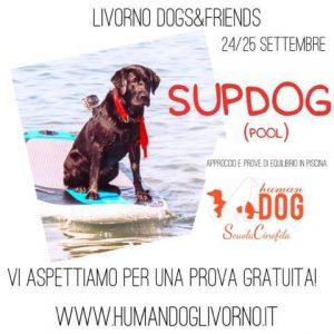 human-dog
