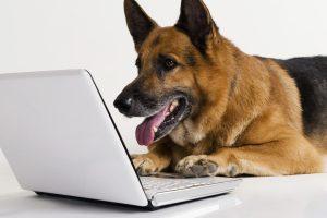 videochiamare il cane