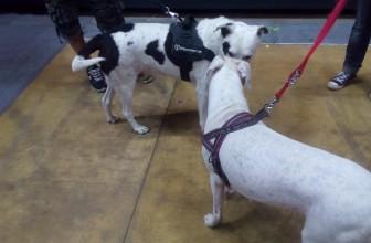 Livorno Dogs&Friends | Tutti i video