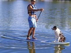 Stand Up Paddle Surf con Cani | Un Nuovo modo di divertirti con il tuo cane
