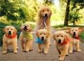 Guinzaglio per cuccioli | Imparare passeggiando