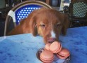 Ricetta Macarons | Variante golosa per cani
