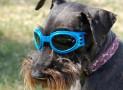 Occhiali da sole per cani | Non solo una moda