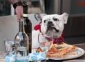 Pizza per cani | Delizia il tuo peloso!