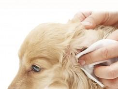 Salviette per Cani | Fresco e Pulito ovunque