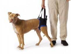 Supporti e aiuti per cani Anziani | Migliora la sua vita con poco!